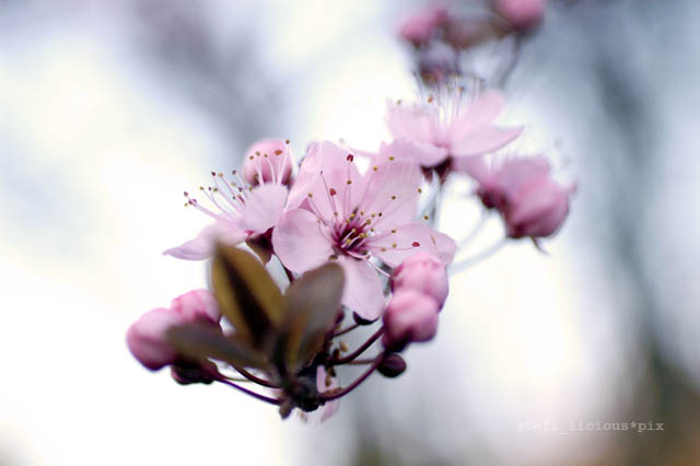 spring_1