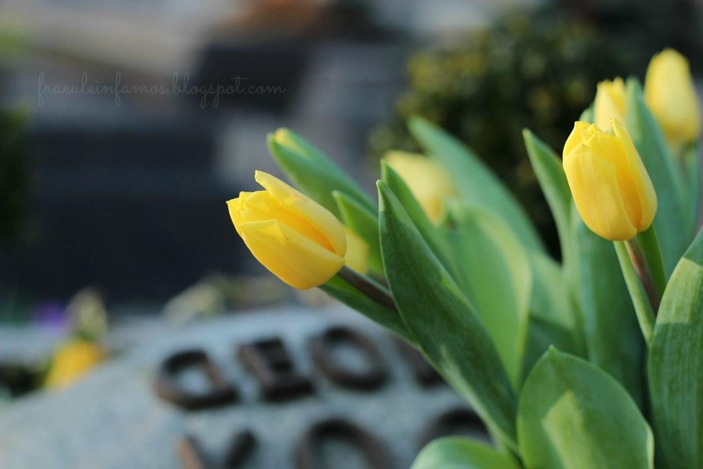 12 von 12 | Tulpen