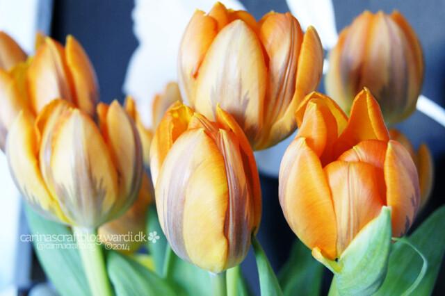 I *heart* tulips