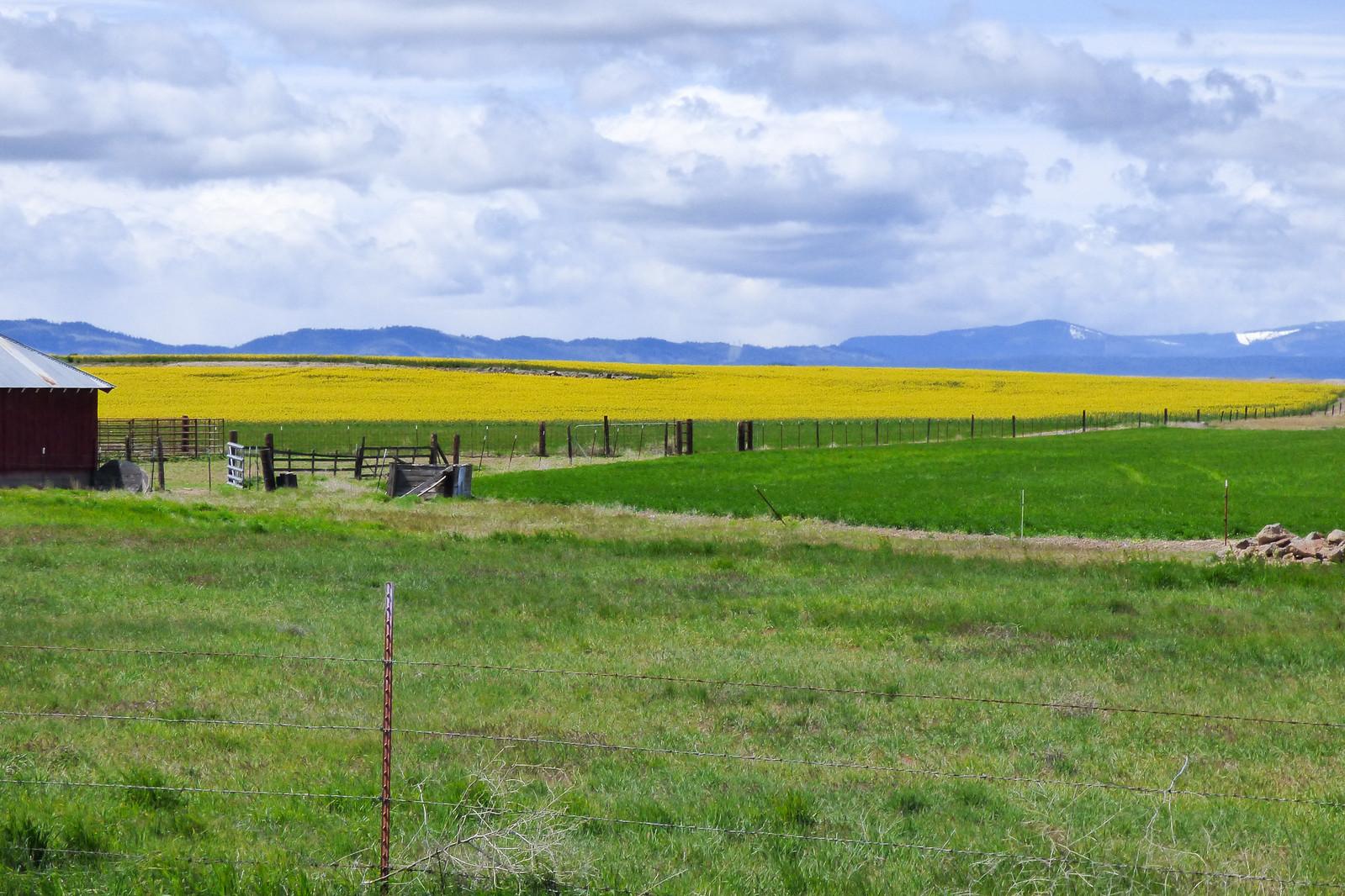 Mustard Farm