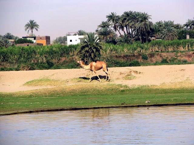 IMG_4614PMR Nile Cruise