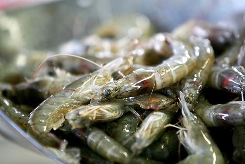 買蝦的標準,除了新鮮,還要看蝦的來源與捕捉方法是不是合法與永續的。圖片來源:綠色和平。