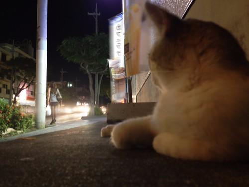 近所の猫 05