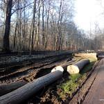 Auenwald Ergebnis der Baumfällung neben 100terten Anderen und siehe die zusätzlichen Spuren auf dem Grünstreifen in der Mitte obwohl rechts und links Wege existieren