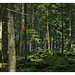 Small photo of Schwarzwald