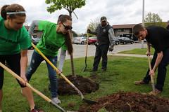 tree-planting-21