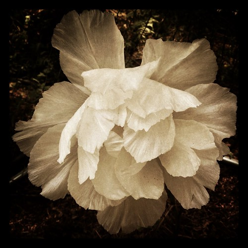 bodipeony by Nature Morte
