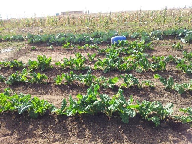 Fig 12. Garden at Mjikelweni