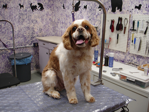 Was and english springer spaniel anal glands consider