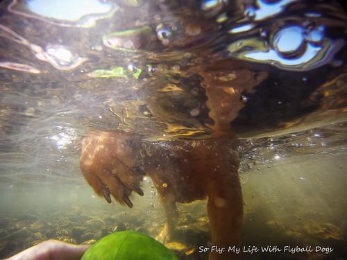 GoPro Under Water-6178