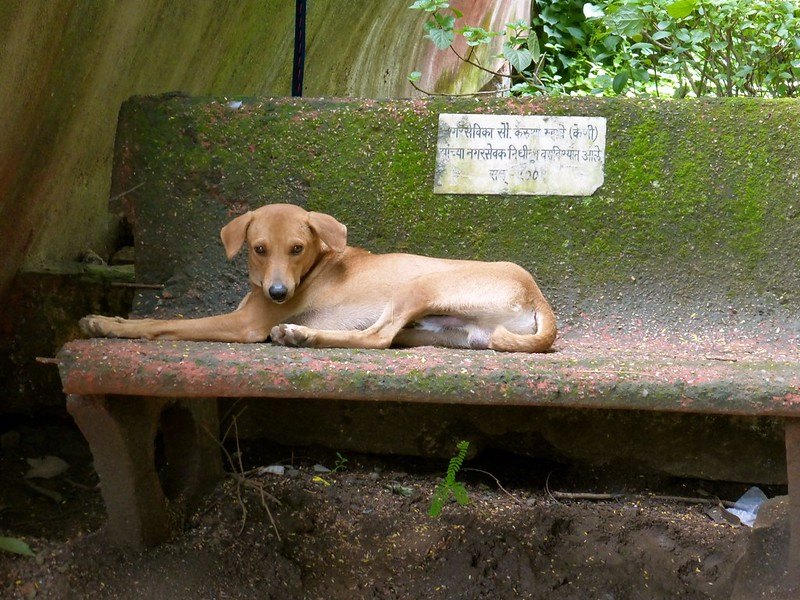 Sion Fort - dog relaxing in garden