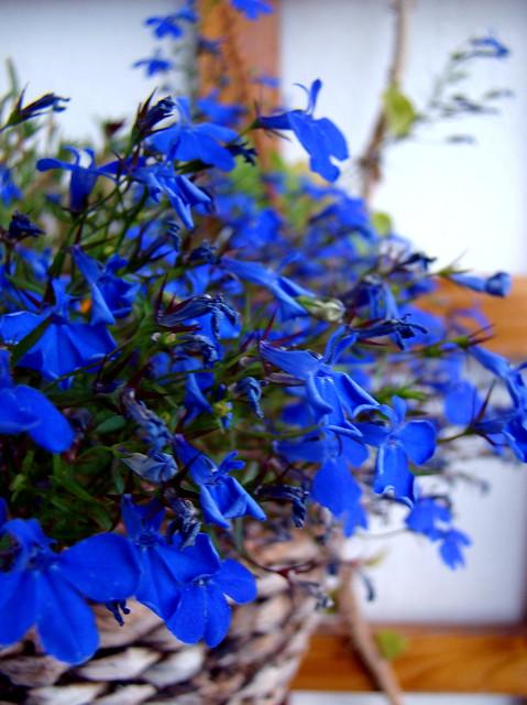 jeges kék
