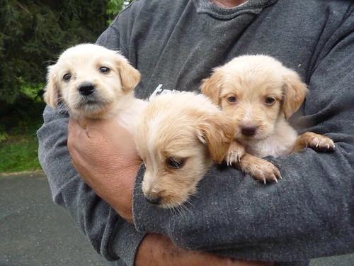 Drei von Acht Minis