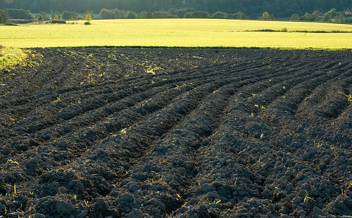field backlight landscape 50mm sweden mark agriculture plowed hajom