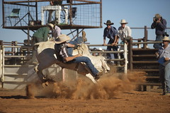 animal sports, rodeo, western riding, event, sports, bull riding, cowboy,