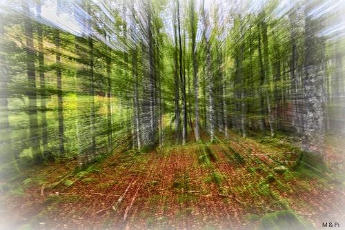 Z- Zoom: El Bosque...