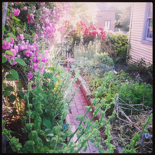 Front garden Nov 2013