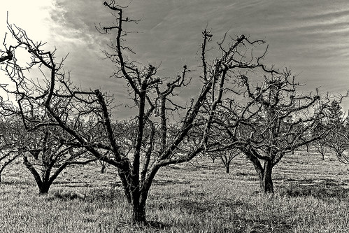 barren trees (black and white) by joeeisner
