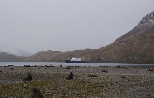 088 Zeeberen en Plancius
