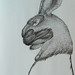 """Máscara de Homem Lebre!?""./""Hare Man's Mask!?"". Caneta sobre papel/Pen on paper, 2005."