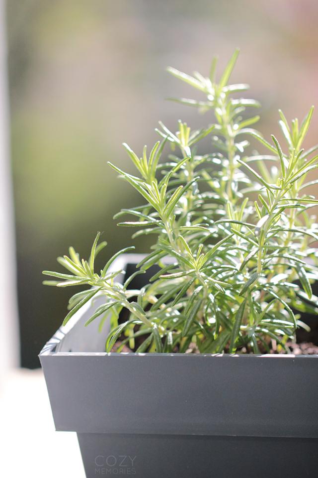 organic aromatic herbs