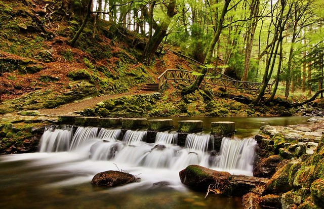 Stepping Stones, Tollymore Forest