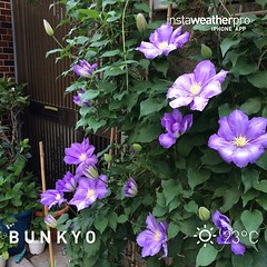 テッセン #instaweather #instaweatherpro #weather #wx #sky #outdoors #nature #world #love #beautiful #instagood #fun #cool #life #nice #bunkyo #japan #day #spring #jp