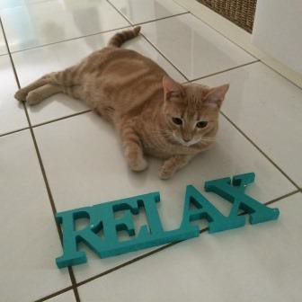 relaxed kitty