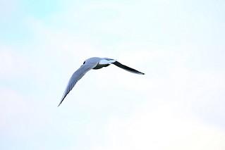 Alone in the world. (Free bird)