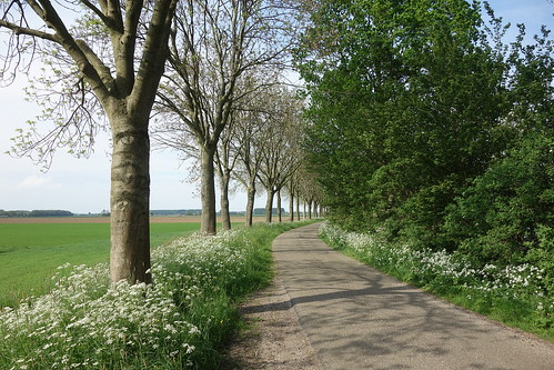 Weeresteinweg, Biesbosch