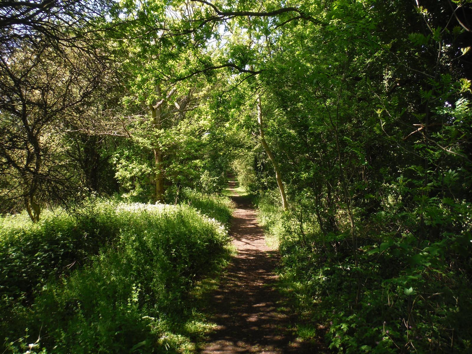 Course of Dismantled Railway (Oxford-Thame-Princes Risborough) SWC Walk 190 - Thame Circular (Extension)