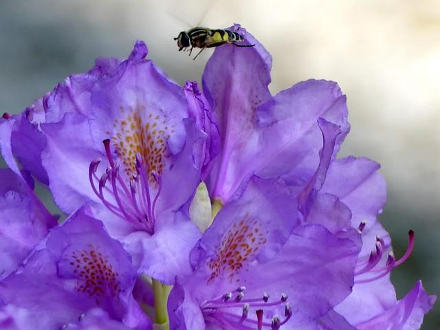 Maya The Bee ;)