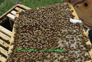 apicoltura vietti