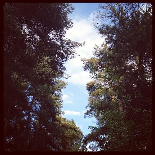 Don't look now but that's blue sky between the #elveden trees #cpfamilybreaks