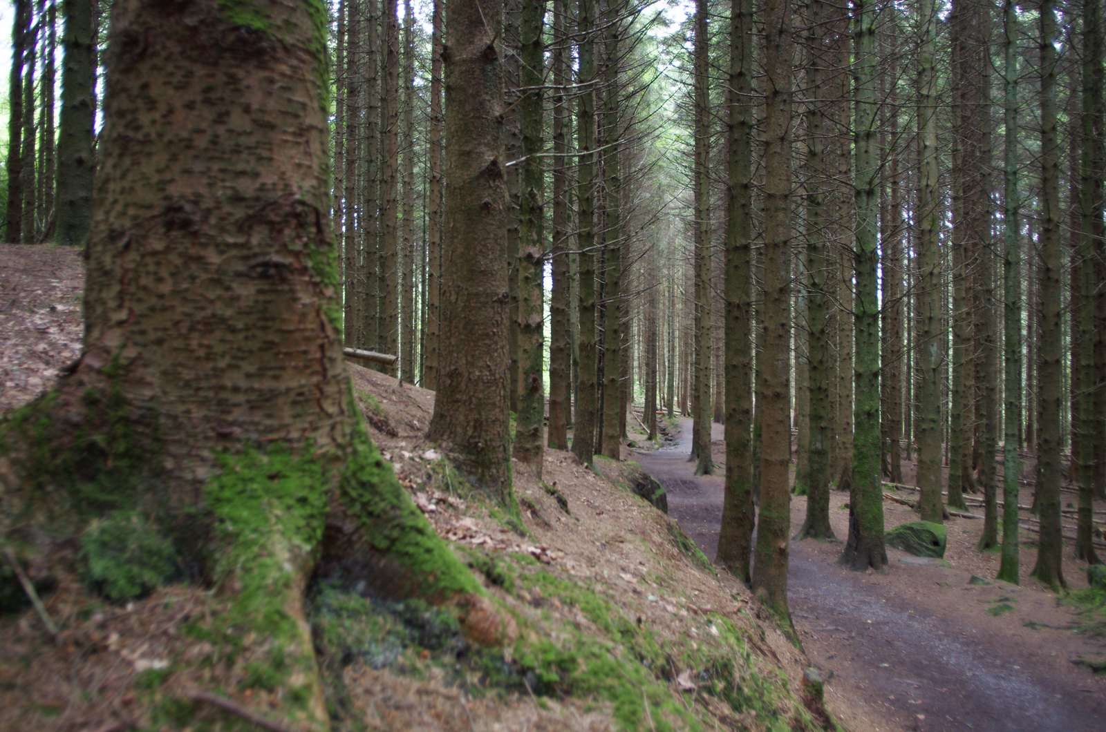 Slieve bloom mountains - into the woods