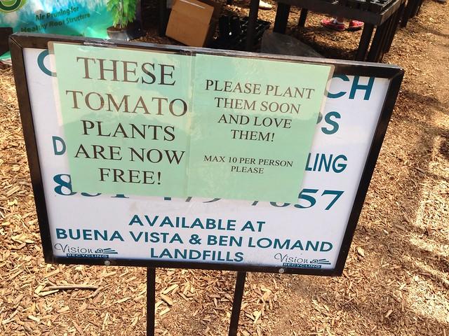 Free tomato plants