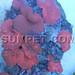 Corals 6.24