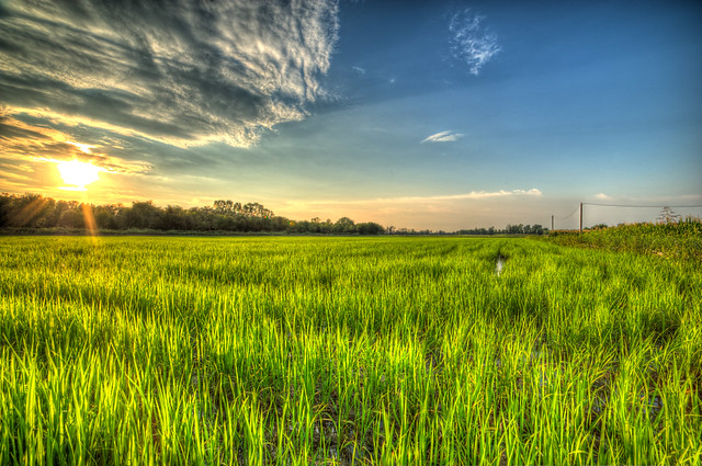 Sunset On Rice Field Flickr Photo Sharing
