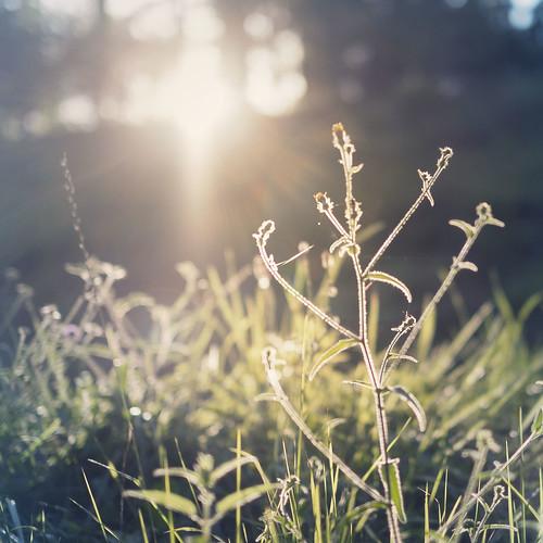 Grass DOF