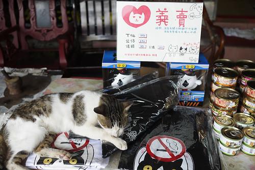 幫忙義賣的貓咪