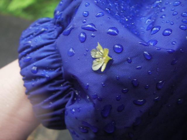 いつのまにやらカッパにくっついていたウリハダカエデの花.かわいいのでぱしゃり.