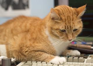 Charley invading the keyboard