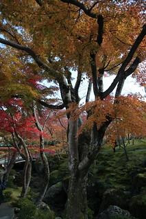 紅葉 at 箱根美術館