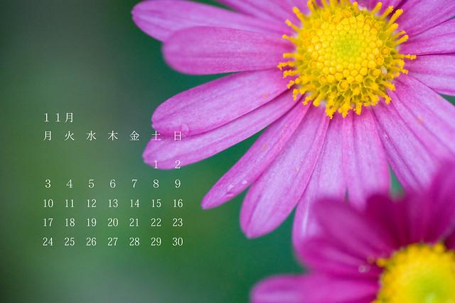 写真_11月のカレンダー