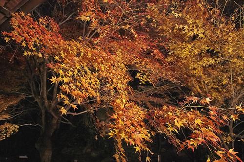 【写真】2013 紅葉 : 天授庵/2020-05-17/IMGP3750