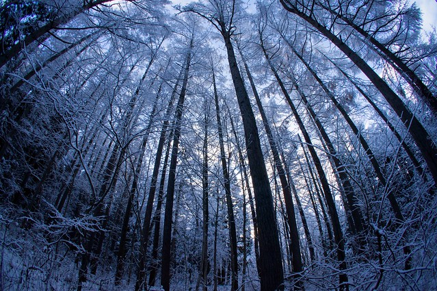 写真_冬迷いの森