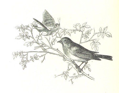 Image taken from page 40 of '[Sing-Song. A nursery rhyme book. ... With ... illustrations by A. Hughes, etc.]'
