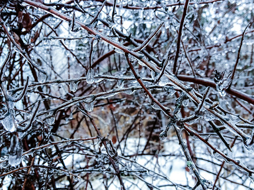 And we thought this was bad (the day before the real ice storm) - #356/365 by PJMixer