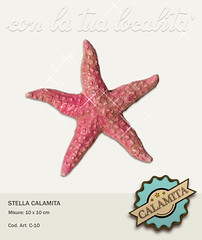 C-10-Stella-Calamita