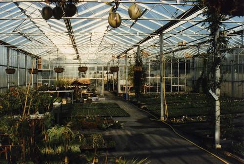 The greenhouse at Manor Nursery, Windsor